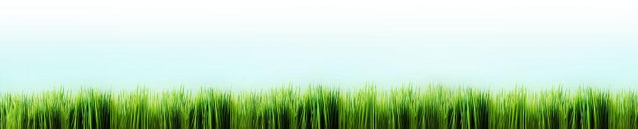 green-initiatives-grass